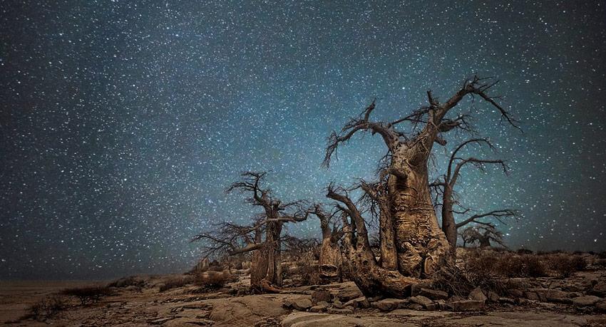 Vinos biodinámicos: ¿Ciencia o ficción?