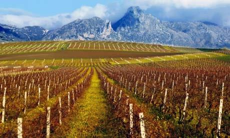 sicilian-wine