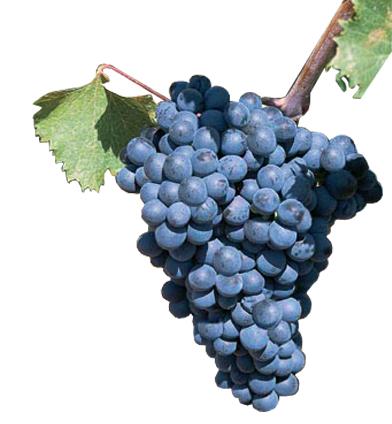 prieto-picudo-vino.png